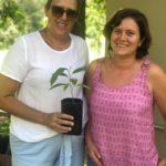 A usuária Debora Cristina Papel Vaz, buscou algumas mudas de árvores frutíferas para plantar em sua residência.