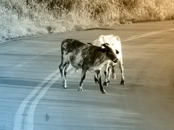 Como agir ao ver animais na pista!